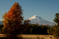 Fall Colors and Mt. Adams 20201025 / アダムス山と紅葉