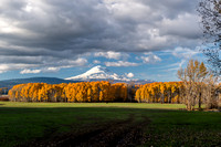 Autumnal Mt Adams from Conboy Lake Refuge / 秋のアダムス山